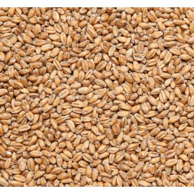 Солод пшеничный  пивоваренный W. MALT (1кг)