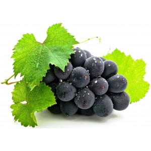 Виноделие <sup>231</sup>